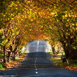 Autumn in Wentworth Falls -