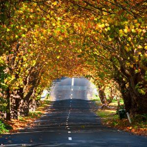 Autumn in Wentworth Falls -