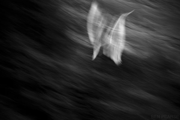 Cockatoo Abstract - Ben Pearse Photography
