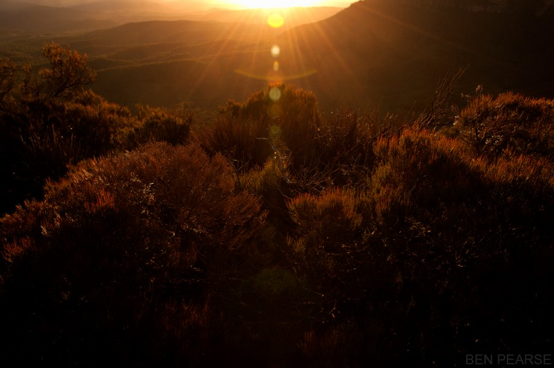 Golden light - Ben Pearse Photography
