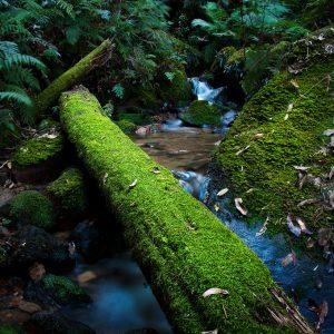 Moss bridge - Ben Pearse Photography