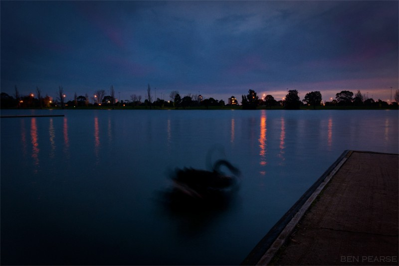 Swan Lake - Ben Pearse Photography