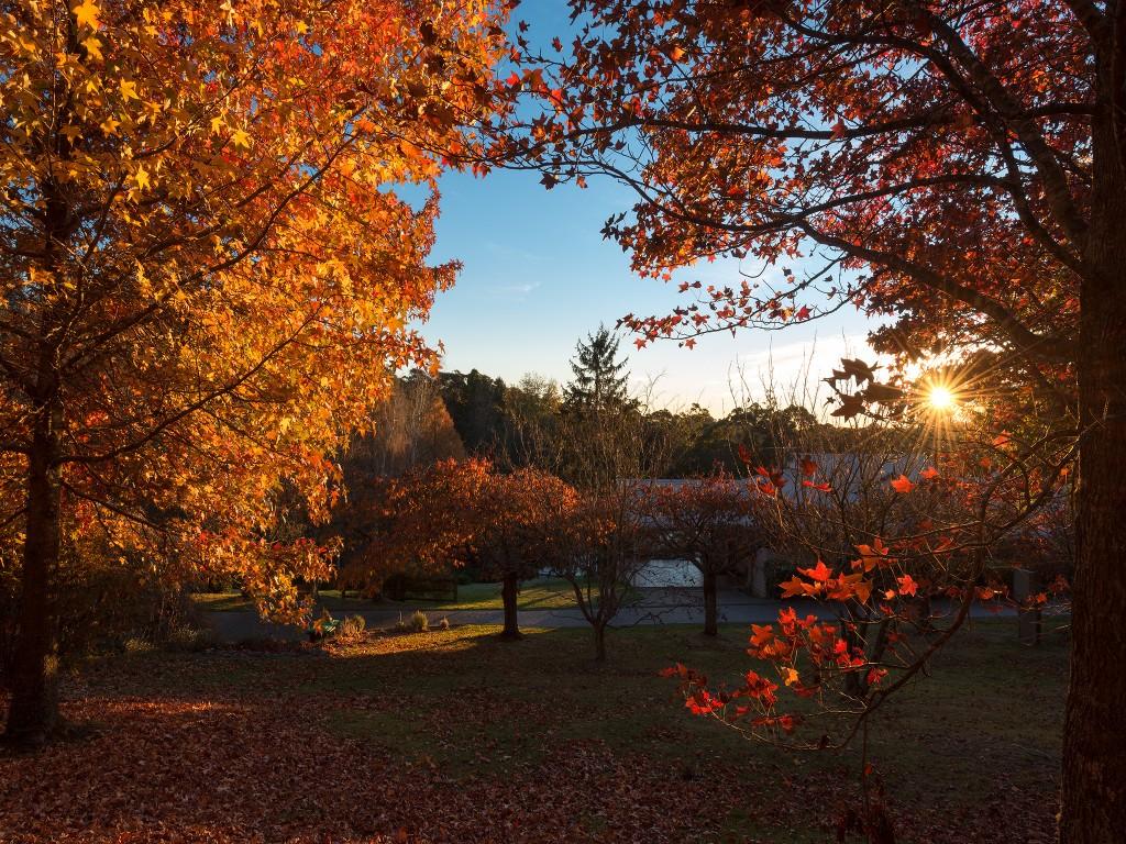 Commercial property Autumn shoot
