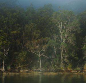 unframed Basking in Light- Fine art landscape print